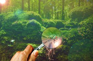 magnifying-glass-671858_1280