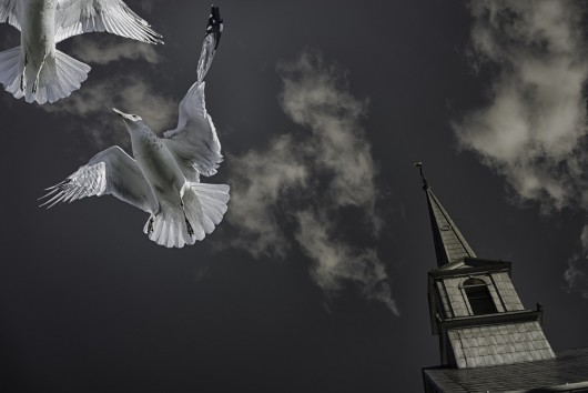 seagulls-488516_1280