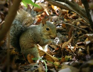 squirrel-61231_1280