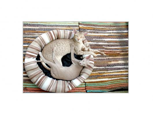 cat-202071_1280
