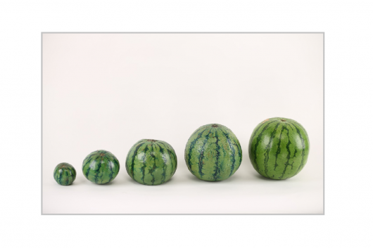 watermelon-715608_1280
