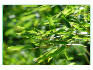 bamboo-167282_1280