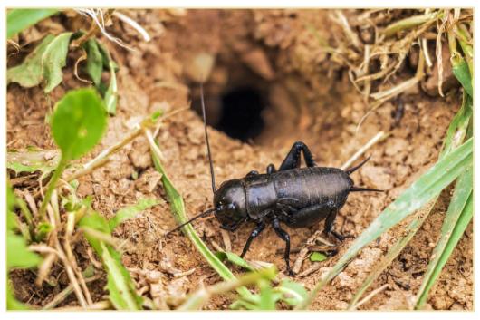 cicada-580103_1280
