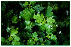 leaf-854517_1280