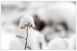 snow-690278_1280