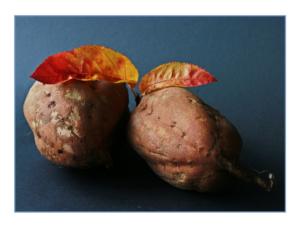 sweet-potato-534874_1280 (1)