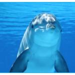 スナメリとシロイルカの違いは?見られる水族館は西日本だけ?