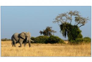 elephant-693432_1280