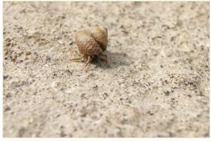 hermit-crab-72506_1920