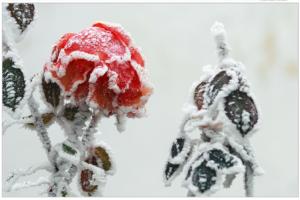 winter-550930_1920