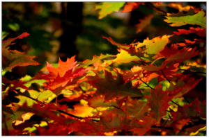 foliage-1014333_1920
