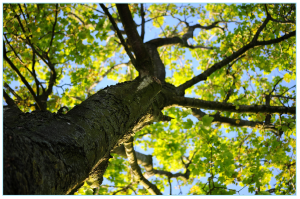 tree-622118_1920
