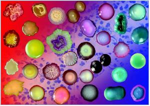 bacteria-958995_1920
