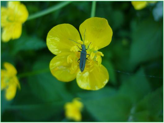 beetle-111198_1920