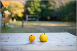 citrus-fruits-648317_1920