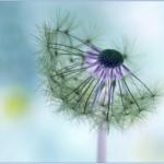 花粉症の注射の種類と副作用とは?費用はいくらかかる?