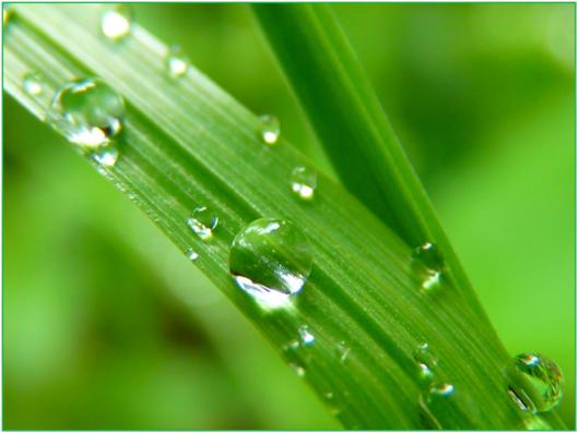 drop-of-water-7720_1920