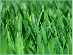 grass-383284_1920