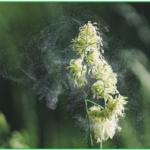花粉症のレーザー治療の効果と副作用とは?治療にベストな時期は?