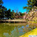 デートも友人同士もおすすめ☆東京で夜桜が見られる名所ランキング5選!