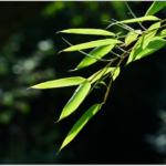 福笹の飾り方は方角に気を付ける?処分する時はどうすべき?