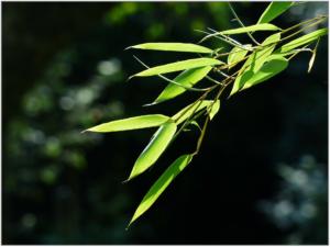 bamboo-167283_1920