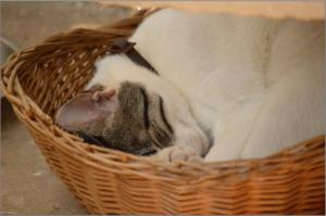cat-838283_1920