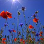 日傘の色の違いと日除け・温度を下げる効果。紫外線対策が出来る選び方とは?