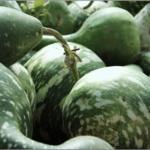 かんぴょうの原料は何で出来ているの?主な栄養・美味しくなる煮方☆