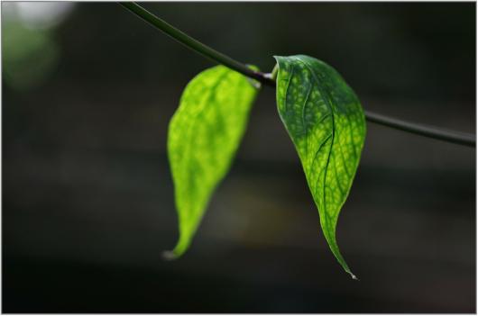 leaf-318667_1920