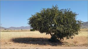 morocco-827830_1920