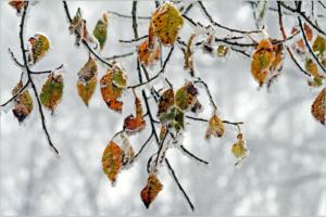 winter-550906_1920