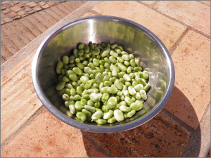 broad-beans-1001279_1280