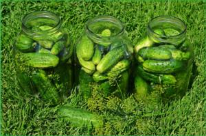 cucumbers-849268_1920