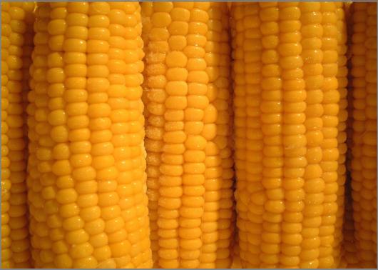 corn-823446_1280