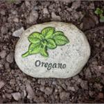 オリーブオイルとハーブで作る!オレガノオイルの効能と使い方・飲み方