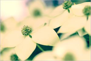 flowers-1184525_1920