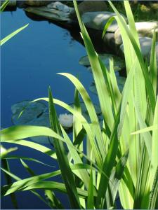 pond-383555_1920