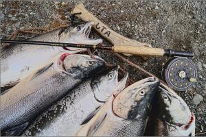 salmon-585701_1920