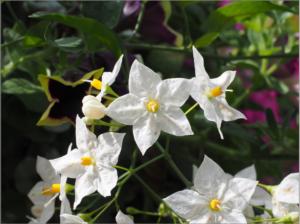 flower-699788_1920