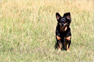 dog-1370677_1920