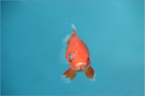 fish-1449733_1920