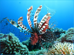 lionfish-1430225_1920