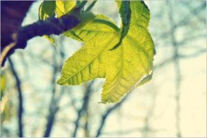 leaf-336588_1920