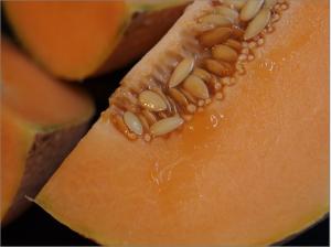 melon-1565567_1920