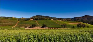 vineyards-1590014_1280