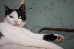 cat-1370899_1920
