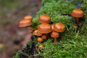 mushrooms-223113_1920