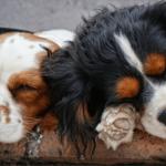 夢をよく見るのは遺伝のせい?体質も睡眠に影響する!