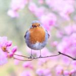 鳥のフンが落ちて来たら縁起が良い!スピリチュアルで幸せの前兆を意味